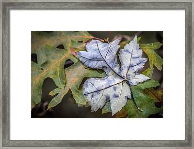 Maple And Oak Framed Print
