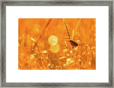 Framed Print featuring the photograph Marsh Sparrow by Francisco Gomez