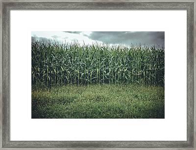 Maze Field Framed Print