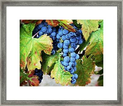Framed Print featuring the photograph Merlot - Wine Country Photography by Melanie Alexandra Price