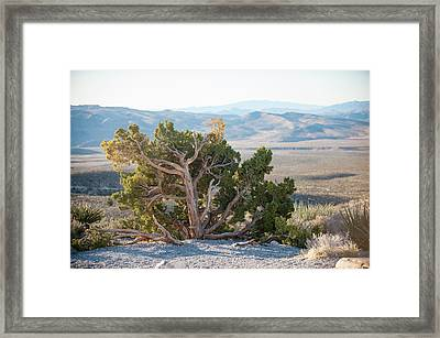 Mesquite In Nevada Desert Framed Print