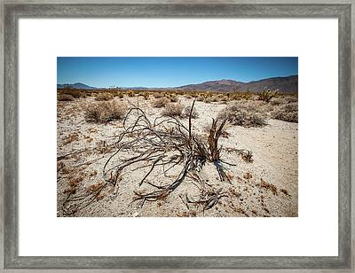 Mesquite In The Desert Sun Framed Print