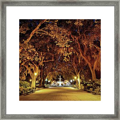 Midnight In The Garden Framed Print
