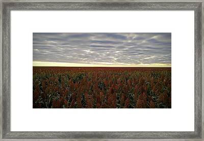 Miles Of Milo Framed Print