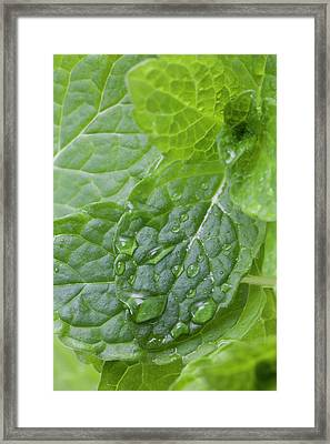 Mint Framed Print by Andrew Dernie