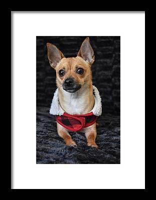 Chihuahua Framed Prints
