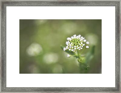 Framed Print featuring the photograph Miss You by Michelle Wermuth