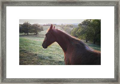 Framed Print featuring the photograph Misty by Carl Young