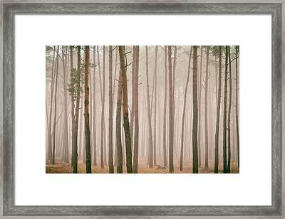 Misty Pines. Horytsya, 2018. Framed Print