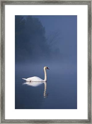 Misty River Swan 2 Framed Print