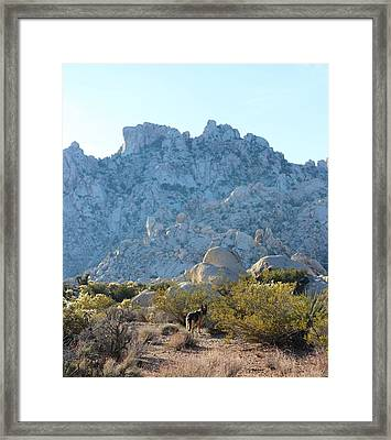Mojave National Preserve Framed Print