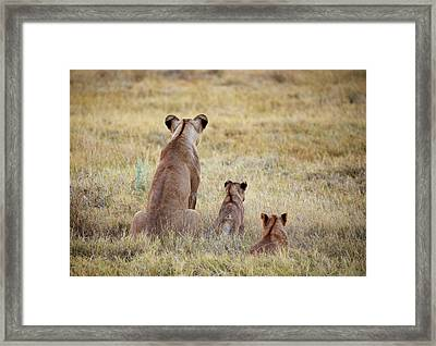 Framed Print featuring the photograph Mom And Cubs by John Rodrigues