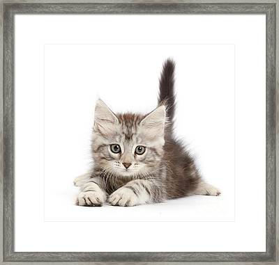 Framed Print featuring the photograph Momentary Paws by Warren Photographic