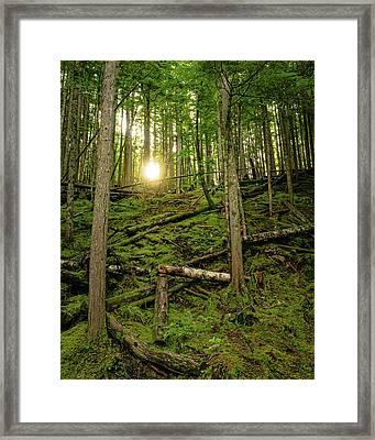 Monashee Forest Portrait Framed Print