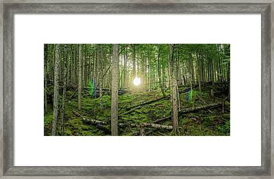 Monashee Forest Sunset With Flare Framed Print