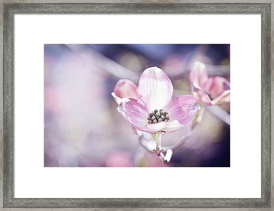Framed Print featuring the photograph Morning Dogwood by Michelle Wermuth