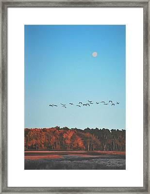 Framed Print featuring the painting Morning Flight by Peter Mathios