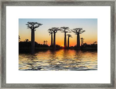 Morondava, Baobab Alley Framed Print by Gabrielle Therin-weise