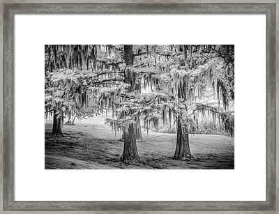 Moss Laden Trees 4132 Framed Print