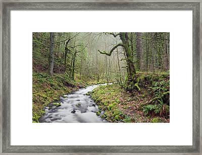 Mossy Landscape Framed Print