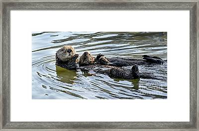 Mother Sea Otter Relaxing With Baby Framed Print