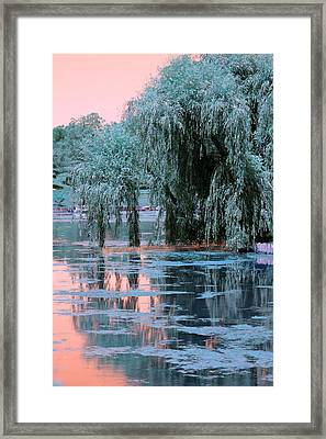 Mother Willow Infrared Framed Print