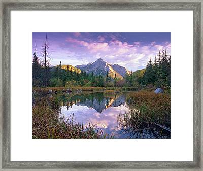 Mount Lorette And Spruce Trees Framed Print by Tim Fitzharris/ Minden Pictures
