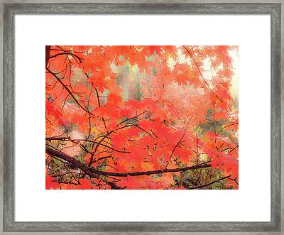 Mountain Maple Color Framed Print by Leland D Howard