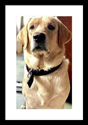 Labrador Dog Framed Prints
