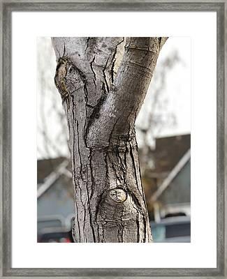 Mr. Skeptical  Framed Print