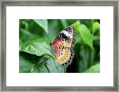 Multi Colored Butterfly Framed Print