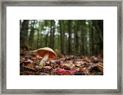 Mushroom Growing In Forest Framed Print by Laszlo Podor