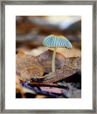 Mushroom Under The Oak Tree Framed Print