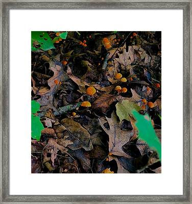 Framed Print featuring the photograph Mushrooms And Leaf Litter by Lukas Miller