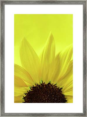 Framed Print featuring the photograph My Sunshine by Michelle Wermuth