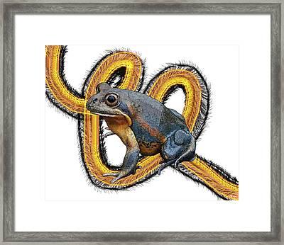 N Is For Northern Banjo Frog Framed Print