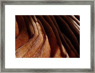 Natural Canyons Framed Print