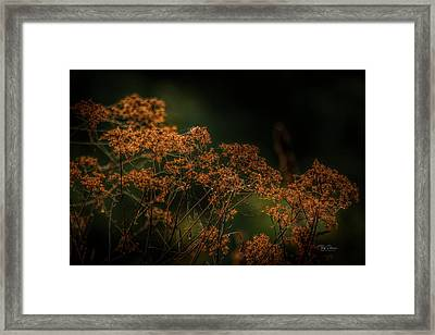 Framed Print featuring the photograph Natural Halloween Colors by Bill Posner