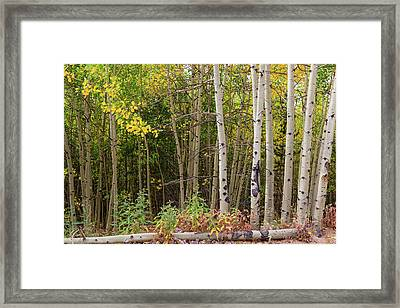 Framed Print featuring the photograph Nature Fallen by James BO Insogna