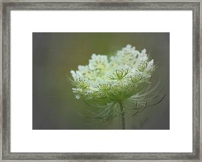 Nature's Lace Framed Print