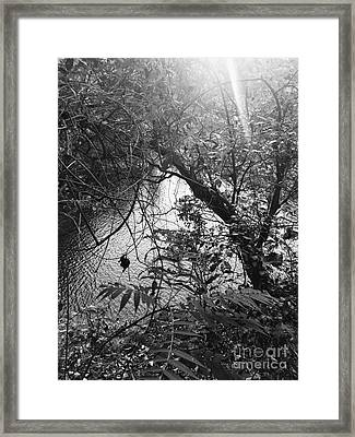 Framed Print featuring the photograph Naturescape Black And White by Rachel Hannah