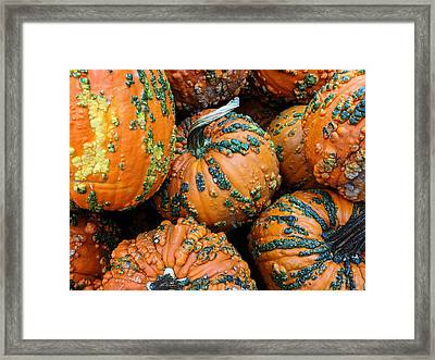 Nestled - Autumn Pumpkins Framed Print