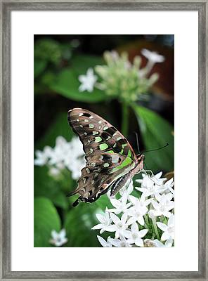 Framed Print featuring the photograph Nicely by Michelle Wermuth