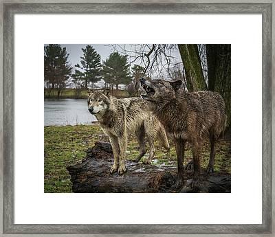 Noisy Wolf Framed Print