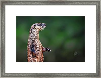Norman The Otter Framed Print