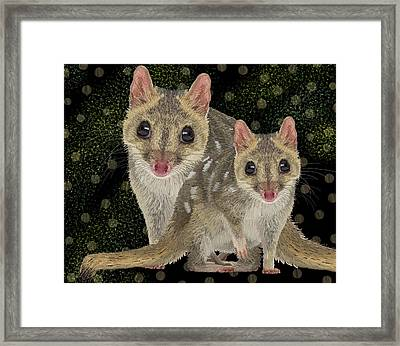 Northern Quoll 3 Framed Print