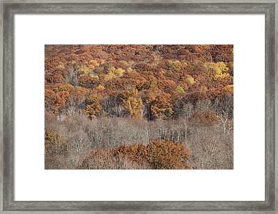 November Color - Framed Print