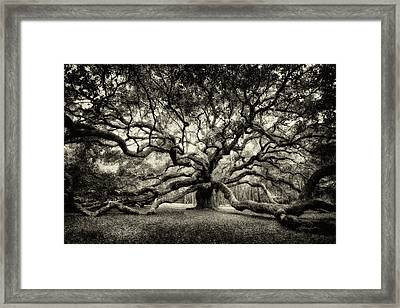 Oak Of The Angels - Sepia Framed Print