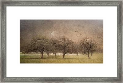 Oak Trees In Fog Framed Print