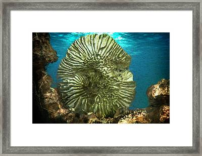 Ocean With Its Life Underground Framed Print